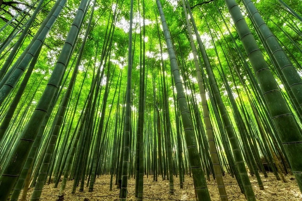 Reflorestamento: O que é? Como funciona?