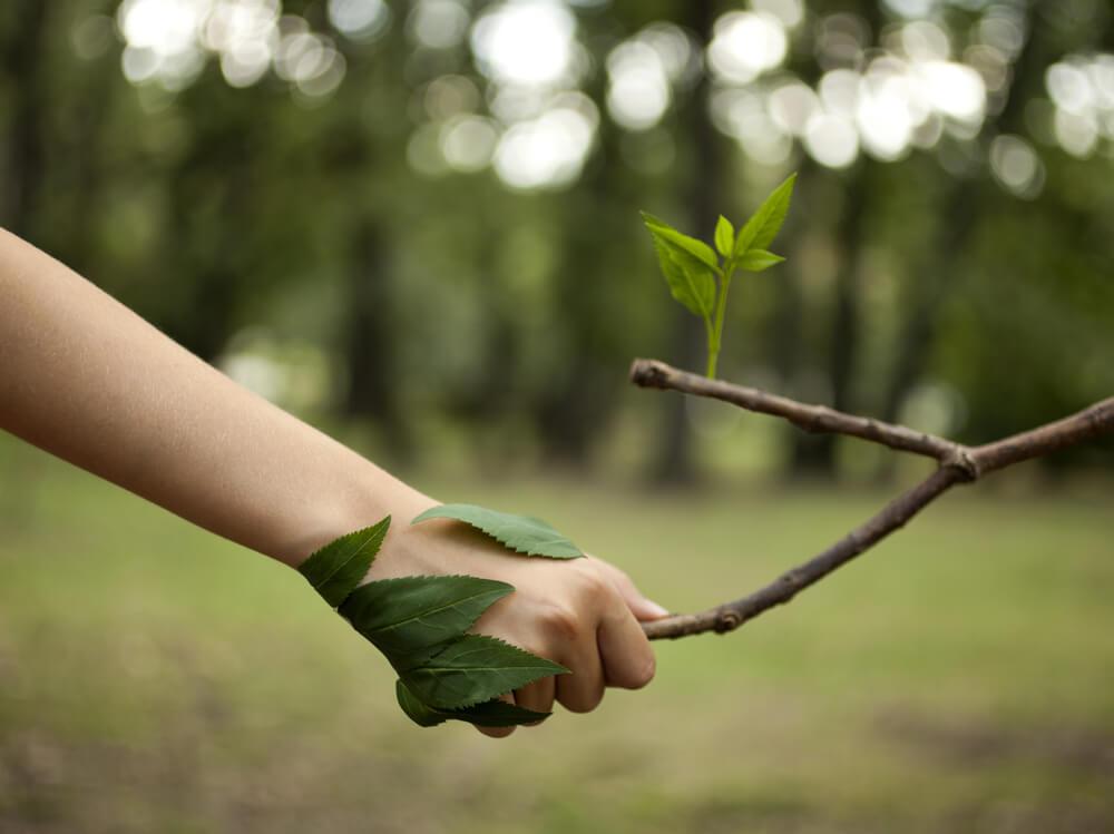 O que é o Licenciamento Ambiental? Esteja de acordo com a legislação!
