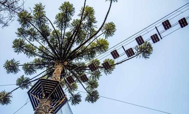 5 espécies de árvores ameaçadas de extinção