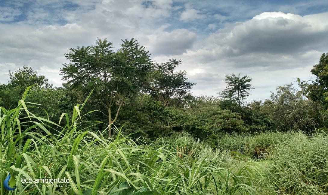 Autorização para supressão de vegetação  - Case