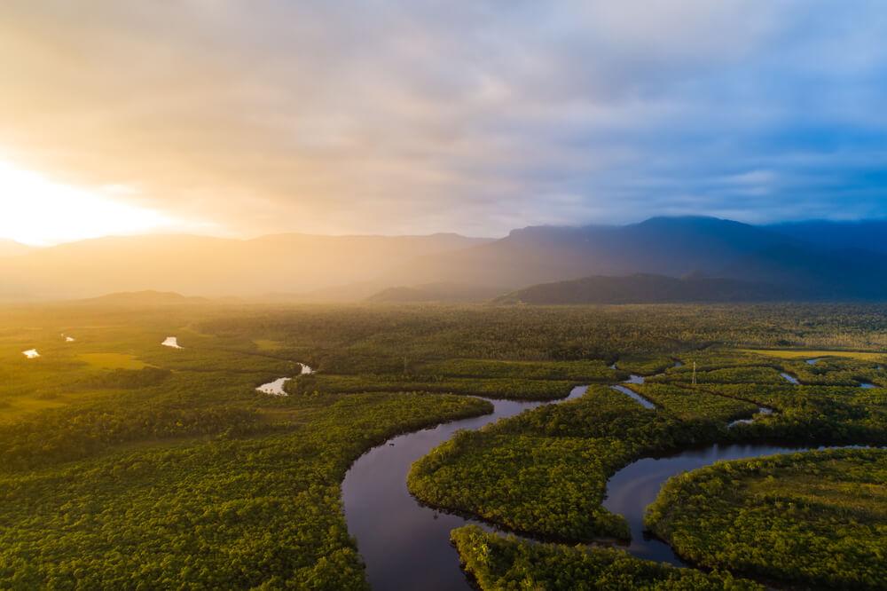 Dia da Amazonia: Por que precisamos preservar o maior bioma do país?