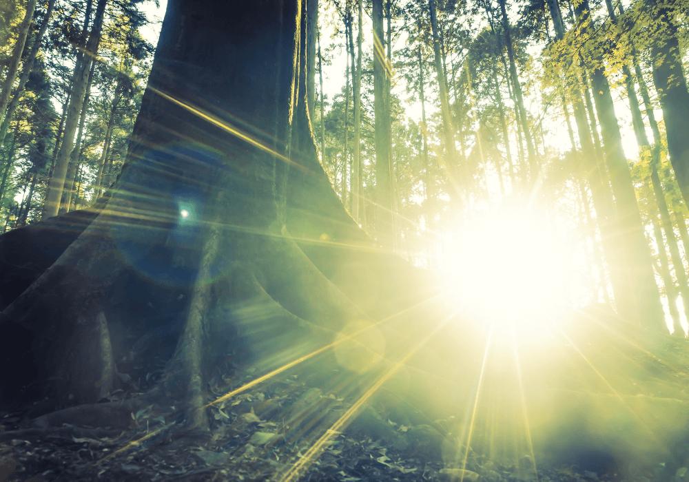 Como é feito o processo de recuperação ecológica?