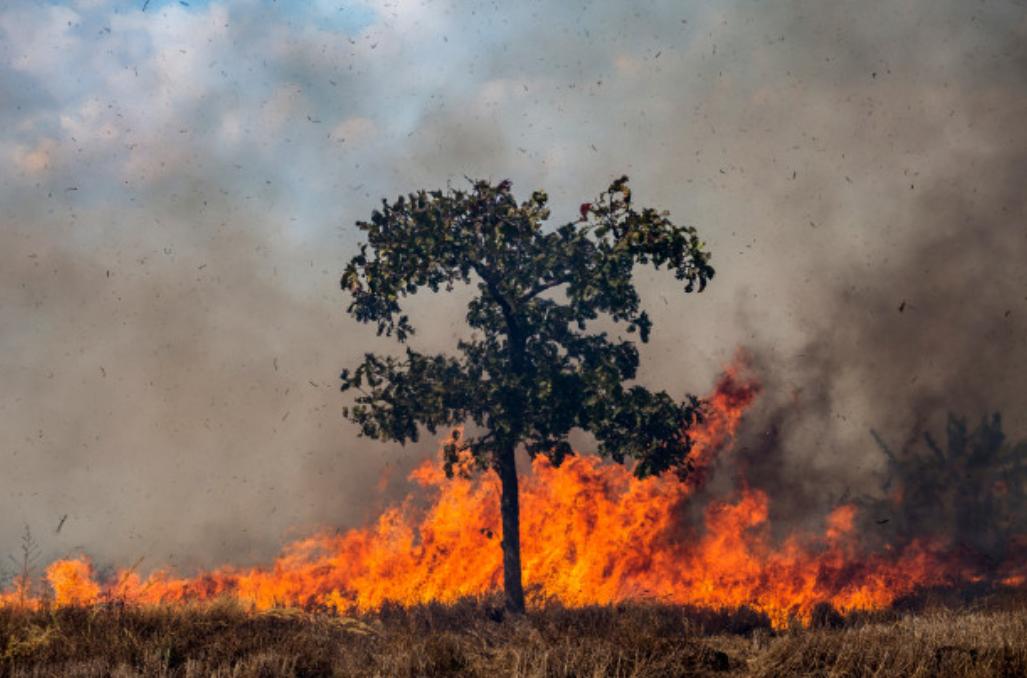 E possível prevenir incendios florestais?